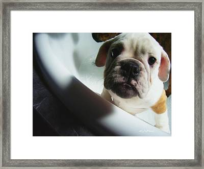 Framed Print featuring the photograph Plea For Help by Jeanette C Landstrom