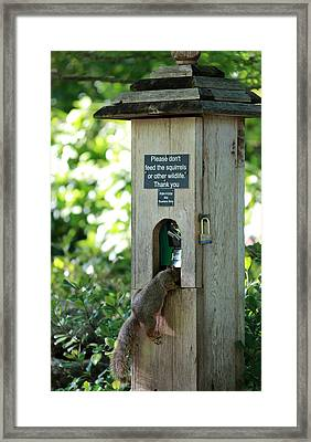 Please Don't Feed The Squirrels Framed Print by Elizabeth Hart
