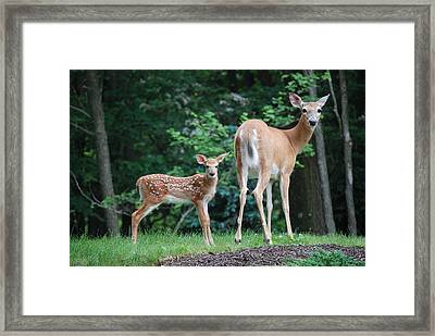 Please Dont Shoot Framed Print by Kathy Gibbons