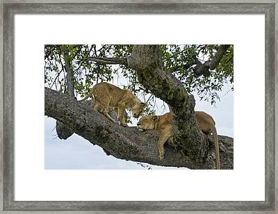 Please Wake Up Framed Print by Michele Burgess