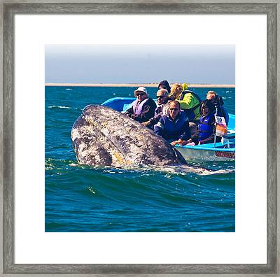 Pleased To Meet You Framed Print by Don Schwartz