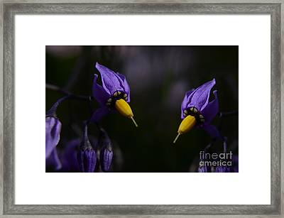 Pleasures Of Purple Framed Print