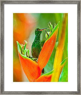 Framed Print featuring the photograph Plenty Of Nectar by Susi Stroud