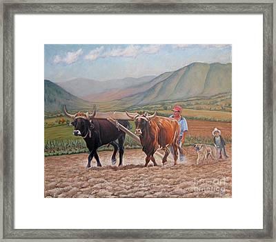 Ploughing In Ocotlan Framed Print by Judith Zur