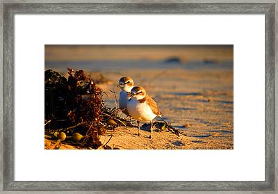 Plover Boys Framed Print by Catherine Natalia  Roche