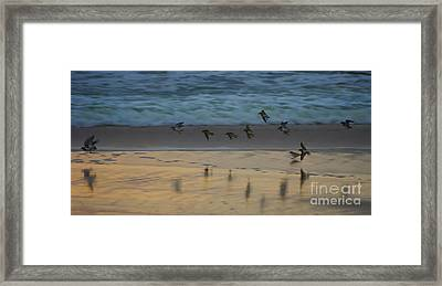 Plovers At Play On A Stormy Morning Framed Print