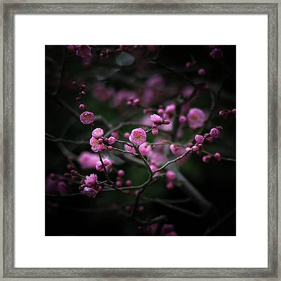 Plum Blossoms Framed Print by I love Photo and Apple.