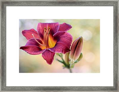 Plum Perfect Framed Print by Heidi Smith