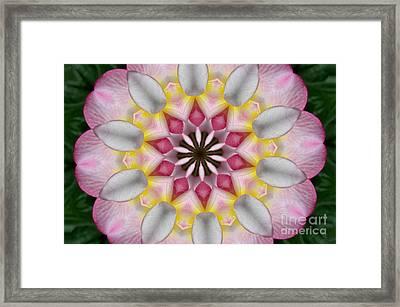 Plumeria 3 Framed Print