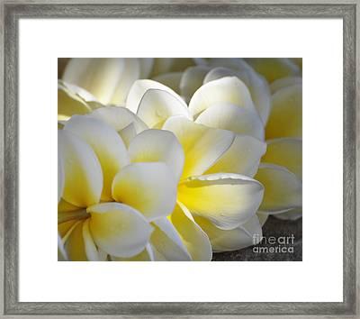 Plumeria Flower Lei Framed Print