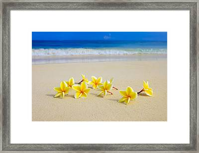 Plumerias On Beach II Framed Print