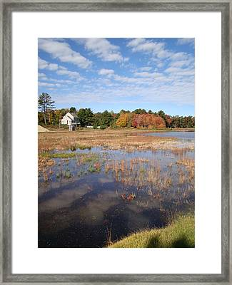 Plymouth Cranberry Bog Framed Print by Mark Haley