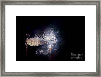 Framed Print featuring the photograph Pod In The Wind by Deniece Platt