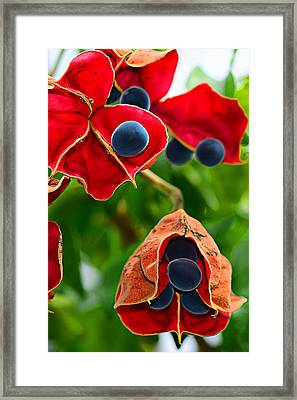 Pods Framed Print by Michelle Armstrong