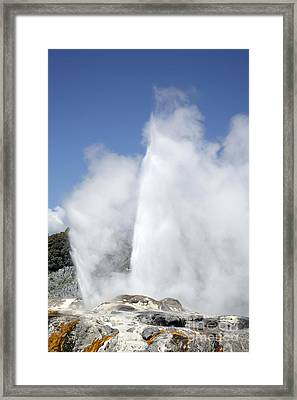 Pohutu And Prince Of Wales Feathers Framed Print by Richard Roscoe