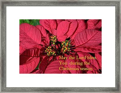 Poinsetta For Christmas Framed Print by Linda Phelps