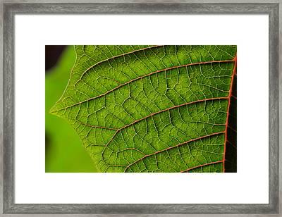 Poinsettia Leaf I Framed Print