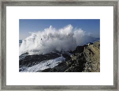 Point-lobos-9-5 Framed Print by Craig Lovell