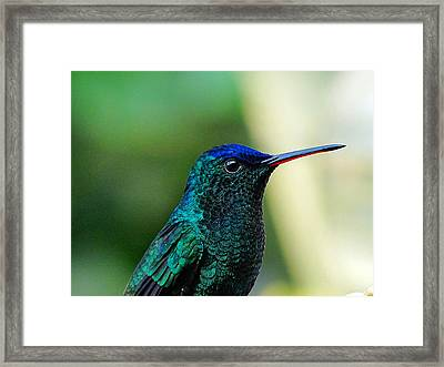 Framed Print featuring the photograph Poised by Blair Wainman