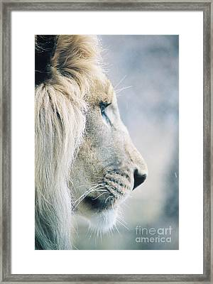 Poised Framed Print by Christopher Griffin