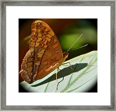 Poised Framed Print by Jocelyn Kahawai