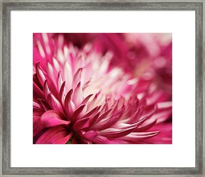 Poised Petals Framed Print by Jody Trappe Photography