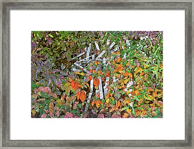 Poison Ivy And Pickets Framed Print