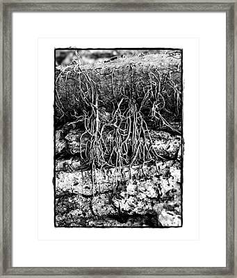 Framed Print featuring the photograph Poison Ivy Roots by Judi Bagwell