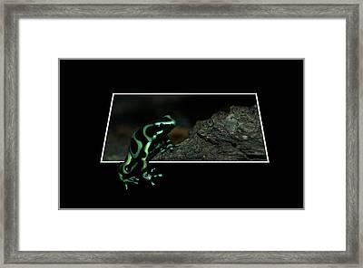 Poisonous Green Frog 02 Framed Print by Thomas Woolworth