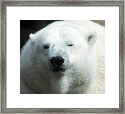 Framed Print featuring the photograph Polar Bear - 0001 by S and S Photo