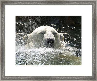 Polar Bear 4 Framed Print