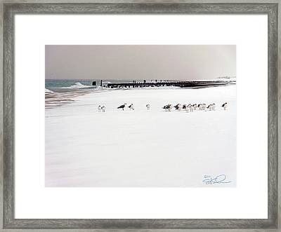 Polar Bird Club Framed Print