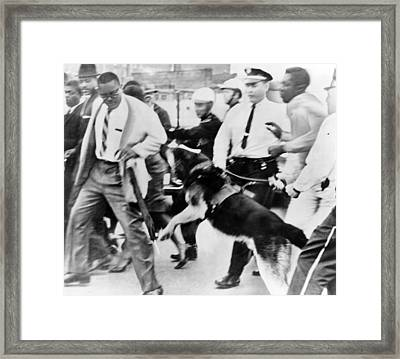 Police Dog Attacking An African Framed Print