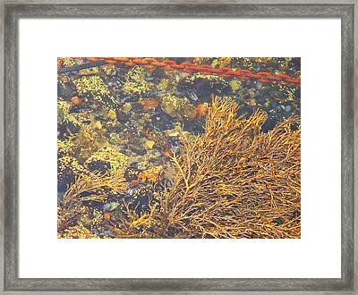 Framed Print featuring the photograph Polished by Kelly Reber