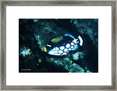 Polka Dot Fish Framed Print by DiDi Higginbotham