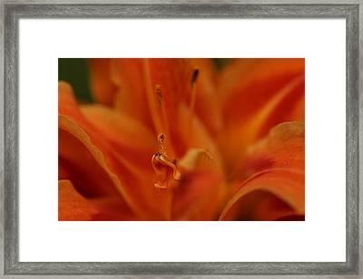 Pollen Framed Print by Gabriel Calahorra