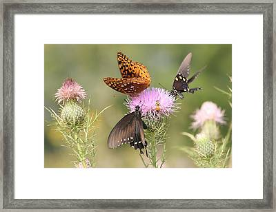 Pollen Party Framed Print by Christopher Ewing