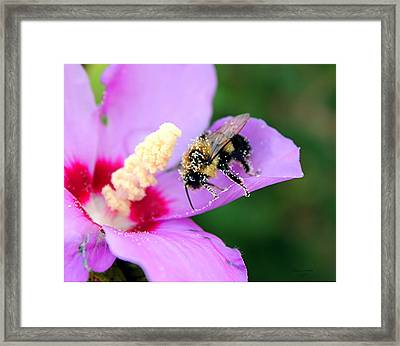 Framed Print featuring the photograph Pollen Sprinkles by Laurinda Bowling