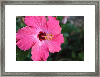 Pollinate Flower. Framed Print by Giancarlo Sherman