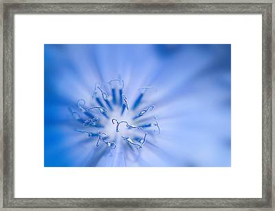 Framed Print featuring the photograph Pollination  Blue Chicory by Randall Branham