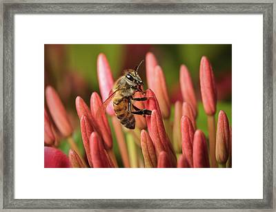 Pollination  Framed Print by Nick  Shirghio