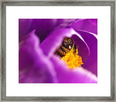 Pollination Party Of One Framed Print by Vicki Jauron