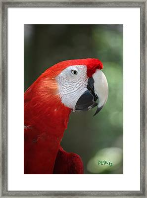Framed Print featuring the photograph Polly by Patrick Witz