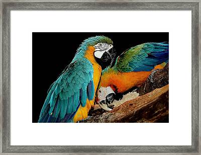 Poly Wants A Cracker Framed Print by Paulette Thomas