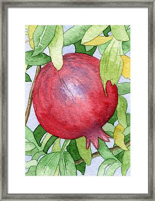 Pomegranate In Tree Framed Print by Eunice Olson