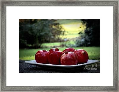 Pomegranates On White Platter 3 Framed Print by Tanya  Searcy