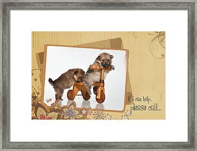 Pomeranian 1 Framed Print by Everet Regal