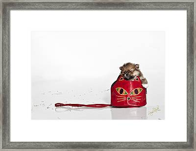 Pomeranian 2 Framed Print