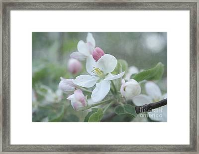 Pomme D Api 01 - S01bt01b Framed Print by Variance Collections