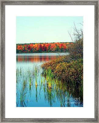 Pond In The Woods In Autumn Framed Print